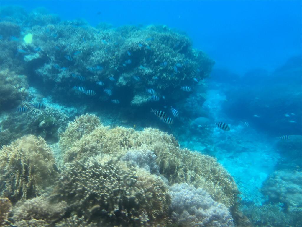 シースカイ博愛からみた宮古島のサンゴ