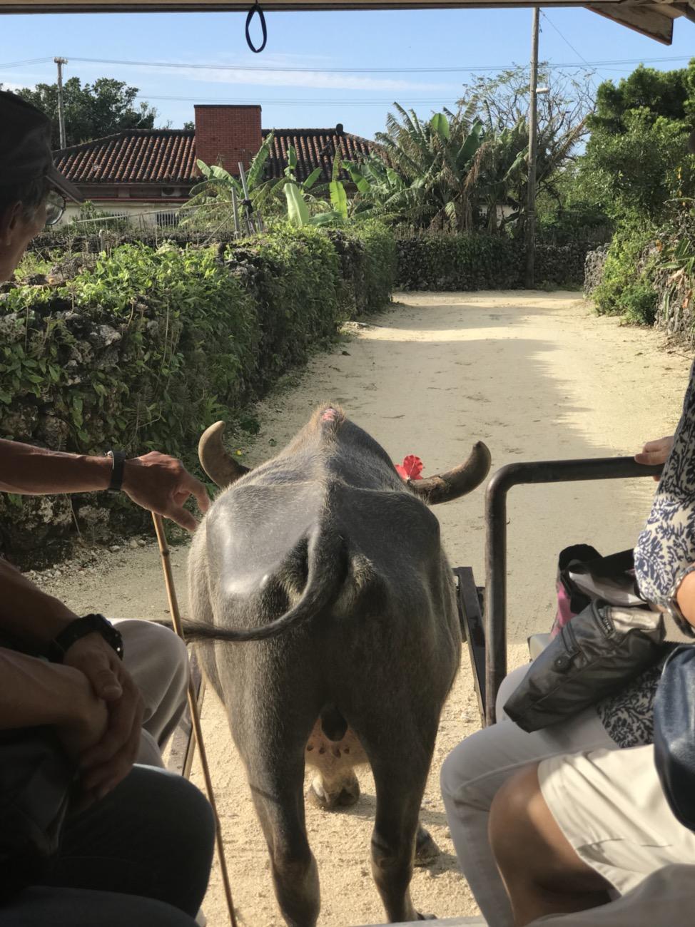 水牛車 竹富島観光おすすめ 新田観光での水牛車