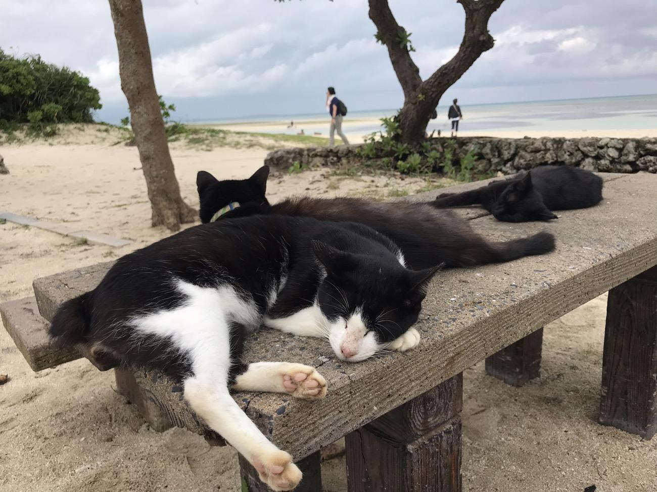 コンドイビーチの猫 竹富島観光サイクリング