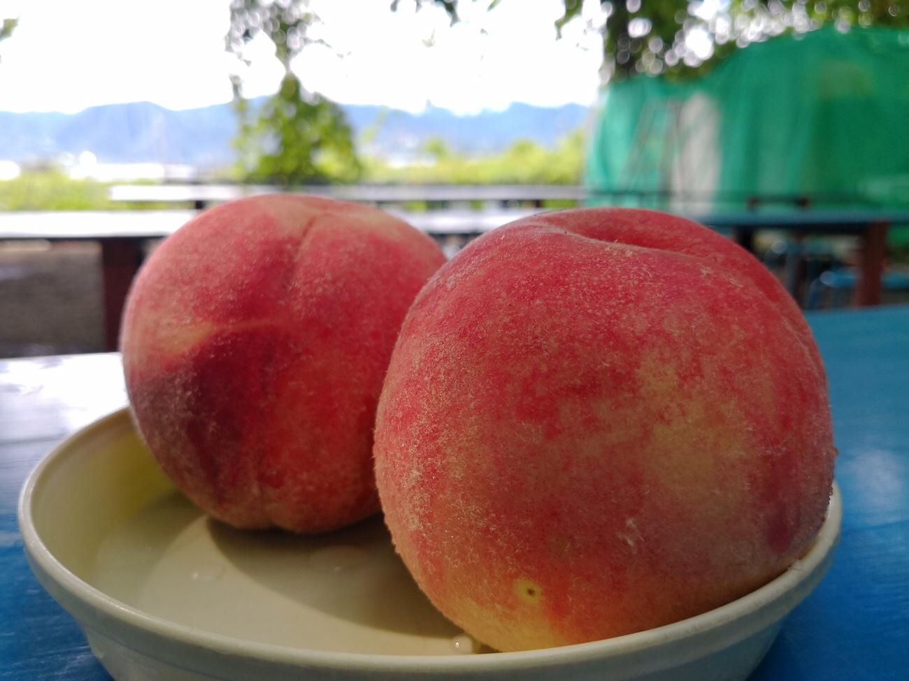 山形桃食べ放題の桃