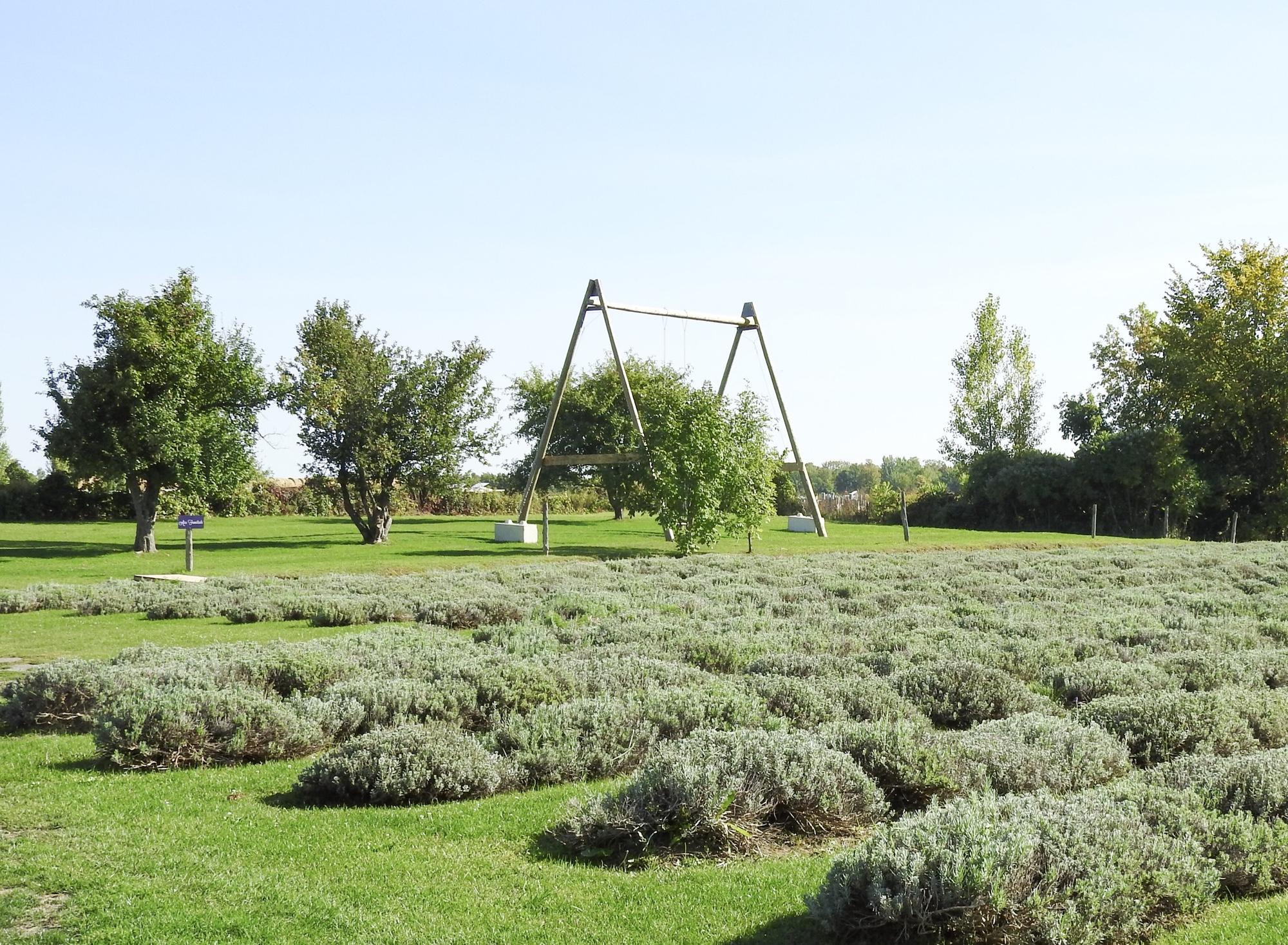 インスタ映えするラベンダー畑 ローレンシャン モントリオール